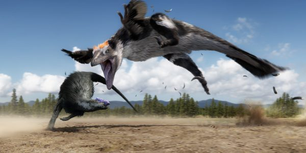 0050_raptor_chases_thesc